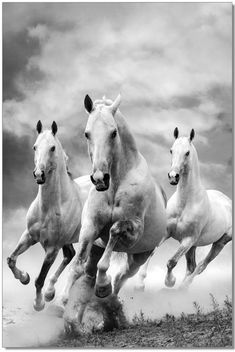 J&M Galloping Horses Galloping horses premum acrylic wall art Wall art is a wonderful way to Cute Horses, Pretty Horses, Horse Love, Most Beautiful Horses, Animals Beautiful, Cute Animals, Horse Photos, Horse Pictures, Animals Black And White