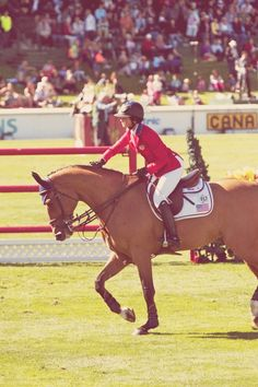 show jumping #equine #horse #horselover http://globalhorsecents.com
