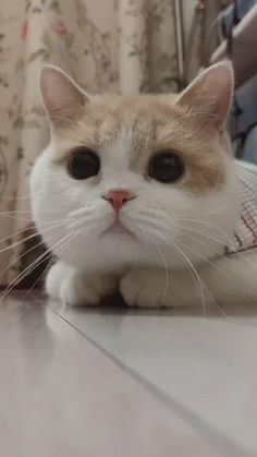 Follow us for more ideas of funny cute cats video and quality cat products. Add WhatsApp: Jay_66 for FREE Items for your cats and dogs ( Limited to USA )kittens cutest | cat breed | cat stuff | i love cats | family cat | stuff for cats | cats funny videos | cute cats | cat love | cat home ideas | cute cat stuff | funny cats | cute cats funny | cute kittys cats | things for cats | funny kittens | kittens | cute and funny cats | first time cat owner | cool cat stuff | cat character | cat emoji ... Funny Cute Cats, Cute Cat Gif, Cute Funny Animals, Cute Baby Animals, Funny Kittens, Kittens Cutest, Cute Little Kittens, Cute Baby Cats, Cute Cats And Dogs