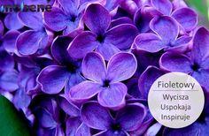Kolor fioletowy wpływa na nas bardzo pozytywnie, łagodzi stres i sprawia, że czujemy się odprężeni. Czy w Twoim otoczeniu jest wiele przedmiotów w tym kolorze? :) #kolor #bez #fiolet #fioletowy #mobene