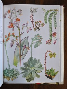 botanical illustrations by barbara everard for wild flowers of the world (1970)