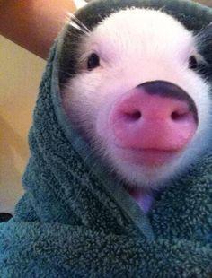 Pig In A Blanket. °