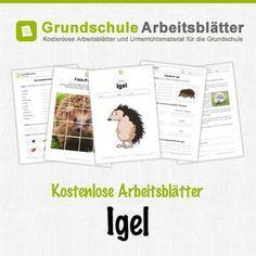 Kostenlose Arbeitsblätter und Unterrichtsmaterial für den Sachunterricht zum Thema Igel in der Grundschule.