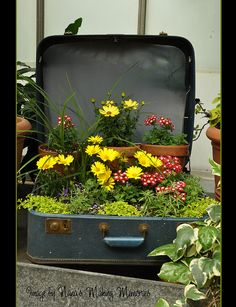 Suitcases = container gardens