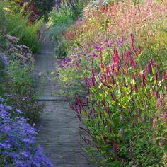 Persicaria | planten | Chris Ghyselen - tuinarchitect
