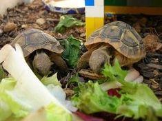 plages de tortues X12 brancher 21 questions à poser lors de la rencontre