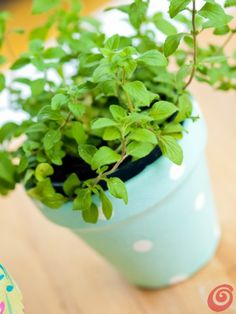 Realizziamo dei vasi decorativi utilizzando dei vecchi vasi in terracotta e degli avanzi di tessuto - e piantiamo delle piante aromatiche, magari della menta per il mojito!