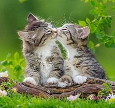 Lovey kittens. Smoochies! ♡