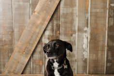 The Barn Door Veterinary Care - Luna Veterinary Care, Vancouver, Dog Cat, Barn, Doors, Meet, Animals, Converted Barn, Animales