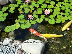 Koi pond around a nice big gazebo to just hang out and for Cool koi ponds