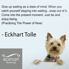 The Power Of Now Quotes Interesting Quote From The Power Of Noweckhart Tolle  Quotes  Pinterest