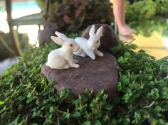 Miniature Fairy Garden - MIRROR, MIRROR IN MY HAND, WHO IS THE FAIREST IN THE LAND? includes two white rabbits that remain playful. 8/2015