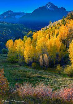 Colorado Fall Gold | Flickr - Photo Sharing!