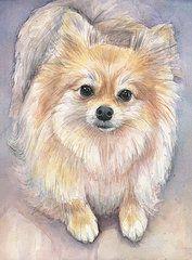 Pomeranian Paintings - Pomeranian Watercolor by Olga Shvartsur