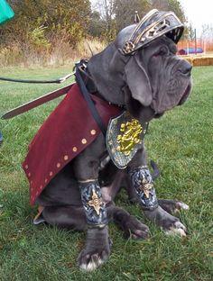 Knight disguised as Mastiff~