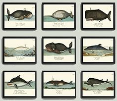 Whale Art Print Set of 9 Antique Beautiful Ocean Sea Marine Nature Colored Natural Science Chart Illustration Home Wall Decor Unframed GNT. Beautiful set of 9 prints based on antique illustrations from 1746. Wonderful details, colors and natural history feel. • The prints measure 4x6, 5x7, 8x10, or 11x14 inch. based on your selection and come with a white border for easy framing. • Printed on professional artist archival matte paper. • The prints are part of Amazon Handmade program and…