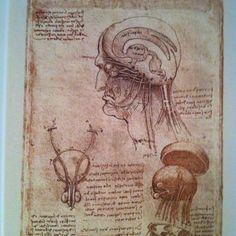 Leonardo'dan beyin çizimleri.
