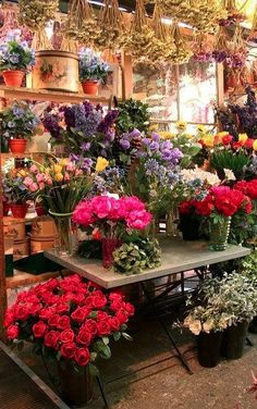 Amsterdam flower market • photo: zyn₪p on Flickr