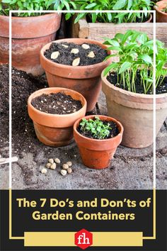 Check out these seven tips for a thriving small-space garden from the National Garden Bureau. Container Plants, Container Gardening, Gardening Tips, Inside Plants, The Perfect Getaway, Peat Moss, Tall Plants, Small Space Gardening, Ornamental Grasses