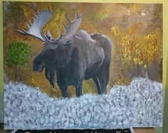 Älg Moose