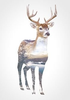 Faunascapes DEER Animal Double Exposure Art