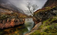 Desolate Beauty Patrick Di Fruscia Tree  Cliff Steam Wet Valley Clouds
