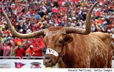 Longhorn Mascot Bevo (University of Texas) - In 1911, 124 alumni each pitched in a buck and purchased a longhorn steer - Bevo. After the Longhorns lost to their rivals, the Texas A  Aggies, 13-0 in a 1915 football game, Texas A fans snuck up on the steer and branded 13-0 on its side. UT students changed this brand to read Bevo,  (a popular nonalcoholic beer.)  Bevo officially became the school's mascot in 1966. Bevo XIV is the current mascot.