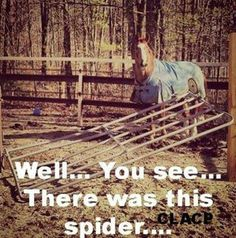 Well... you see... there was this spider... #horses