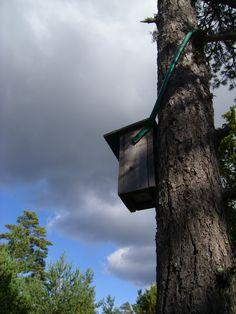 Nesting boxes. photo: Johanna Rehn