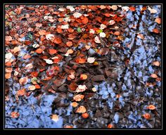 Autumn colours are everywhere now. The colours of the leaves against the water and the reflection of the sky work well together. Autumn Colours, Forest Floor, Reflection, Textiles, Sky, Flooring, Seasons, Heart, Fall