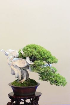The art of carving and training #Bonsai art #Bonsai| http://bonsaiart345.hana.lemoncoin.org
