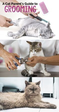 Although cats are known for keeping themselves well-groomed by assisting your feline friend with regular grooming sessions you can bond with your kitty and keep your pet looking great. This guide will cover the basics of grooming and bathing your cat. I Love Cats, Crazy Cats, Cool Cats, Cat Care Tips, Pet Care, Kitten Care, Neko, Cat Behavior, Cat Facts
