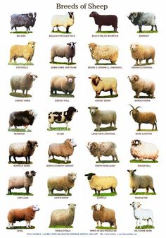e8c9b2e564c 4361 Best Sheep images in 2019