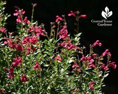 native, perennial, bees, butterflies, hummingbirds