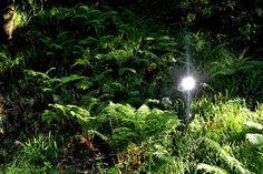 GARDEN SCULPTURES. Mirror dodecahedrum. kelburn Castle Glen.4. 2015. David Mola