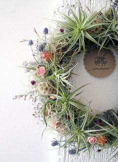 air plant wreath by robincharlotte summer.jpg