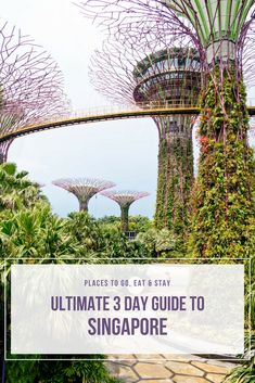 3 Days in Singapore and so many things to do, amazing restaurants and great hotels. If you're planning a trip to Singapore, here's the ultimate guide with all my favorite places that you don't want to miss.