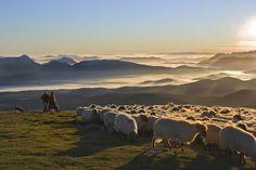 Las ovejas y el fin del mundo