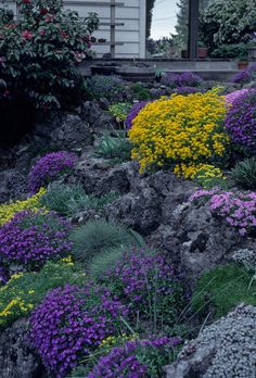 rock garden Look to alpine plants and - gardencare Garden Projects, Alpine Plants, Plants, Contemporary Garden, Purple Garden, Sustainable Garden, Rockery Garden, Garden Inspiration, Rock Garden
