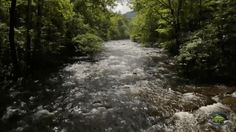 The Little River at Metcalf Bottoms in the Smoky Mountains.