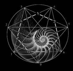 chaosophia218: Sacred Geometry of the Nautilus Shell.The...