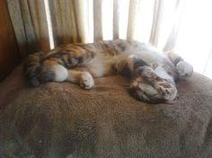 Kiki sleeping funny!