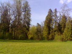 Parcul dendrologic Simeria