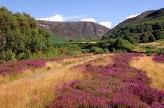 glenashdale water falls, isle of arran, scotland - Bing images