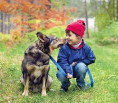 Hike with your dog in New England   The Bark