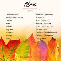 Aquí os traigo vocabulario relacionado con el otoño. Espero que os resulte útil. English Time, Beer Bar, Infographics, Food, Halloween Gourds, Harvest, Learning English, Vocabulary, Info Graphics