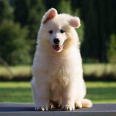 Cutie! I NEED IT AHHHHHHHHHHHH
