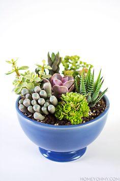 How to plant a mini succulent garden