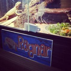 Earl Ragnar, Bearded Dragon, Popcorn Maker, Kitchen Appliances, Diy Kitchen Appliances, Home Appliances, Kitchen Gadgets