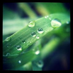 Raindrops On A Blade Of Grass - http://instaprints.com/featured/raindrops-on-a-blade-of-grass-vicki-field.html